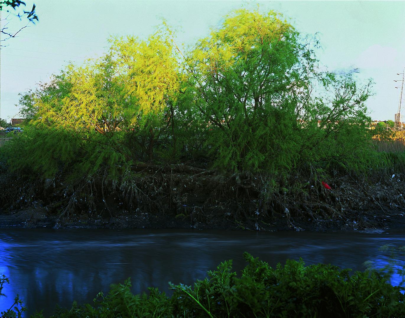 swan-songs-channelsea-river-2002