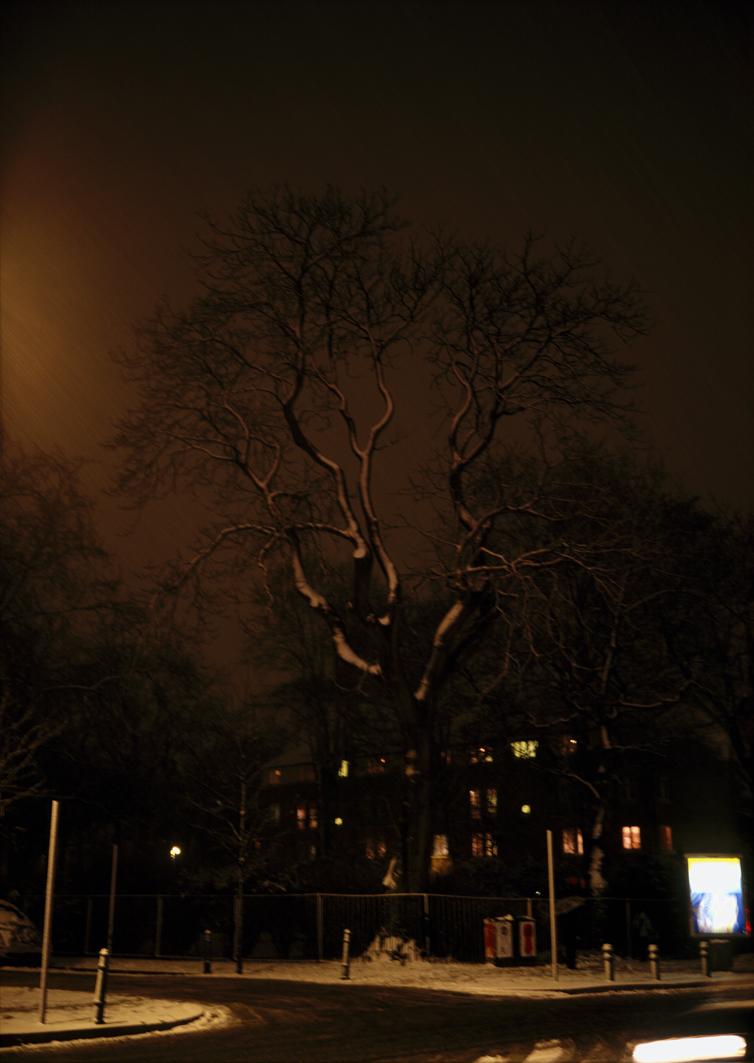 swan-songs-tree-of-heaven-2004