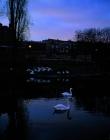 swan-song-2002